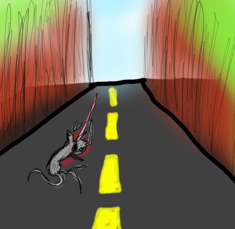 road kill  (2)