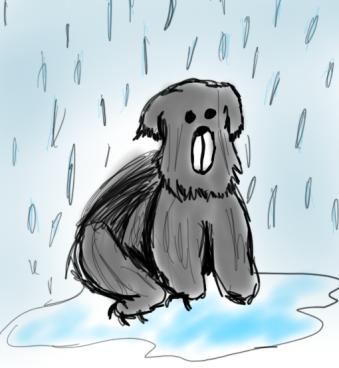 rain bear (2)