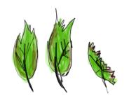 Leaf rating (3)