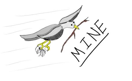 mine bird